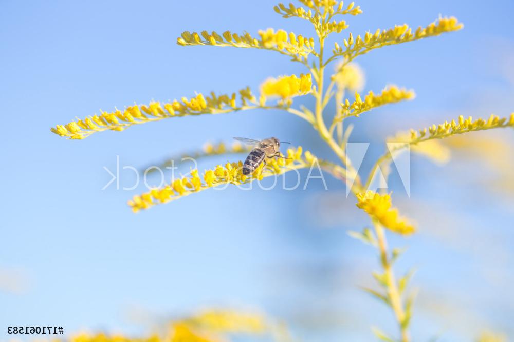 Impressie afbeelding plant